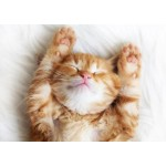 Петс декор кот рыжий